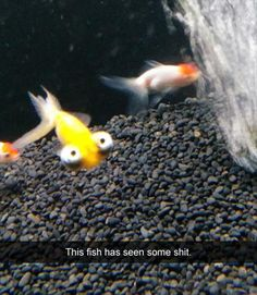 funny fish has seen some shit