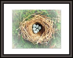 Mother's Day is approaching and here is a gift that will knock her socks off! WIN an 8x10 (matted to 11x14) print of your choice from Picture It Personal! We adore this company. Below is their precious Eggs In Nest custom print. If you'd like more ways to win, it's simple - LIKE this giveaway and/or tag a friend! Giveaway here: http://bit.ly/2oFOYDQ