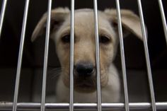 This little pup is caged. A spirit, caged. A life, caged. Let them be free!