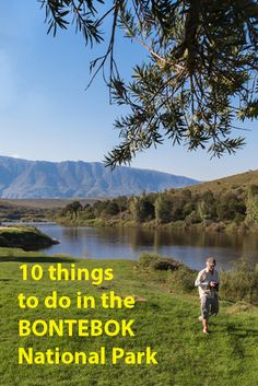 By Roxanne Reid We arrived at Bontebok National Park near Swellendam at the foot of the Langeberg in the grip of a heatwave. The veld was dry, the sun was on the boil and hundreds of miggies were...
