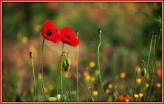Γη και Ελευθερία.: Ελεύθεροι Πολιορκημένοι! Dandelion, Poetry, Flowers, Plants, Blog, Dandelions, Florals, Blogging, Poetry Books