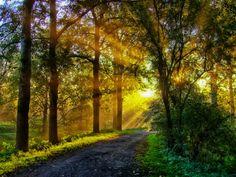 Ein Morgentraum... / A morning dream...