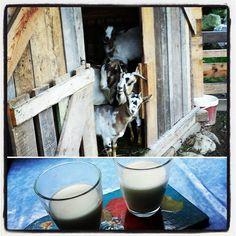Buongiorno! Colazione con latte di capra