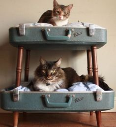 storagegeek: Amazing pet beds from Etsy shop SalvageShack! Loving the double decker converted suitcase pet beds. She has a way with salvaged materials as anyone browsing her sold items would agree. Cat Bunk Beds, Diy Pet, Diy Cat Bed, Pet Beds Diy, Cool Cat Beds, Cat House Diy, Old Suitcases, Cat Room, Pet Furniture