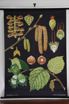 These vintage style science wall chart featuring bold botanical illustrations are an incredible wall feature. They are printed on linen cloth-backed paper and flanked with a wooden rod at the top and