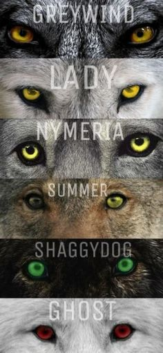 Beautiful &Loyal  Dire Wolves from (G.O.T TV)