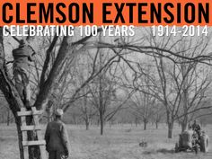 """""""Mechanical shaker attached to a limb of pecan tree during harvesting process."""" Image from Clemson University Special Collections. Clemson Extension Circular #301: """"Pecan Production and Marketing in South Carolina"""", August 1947. #ClemsonExt100"""