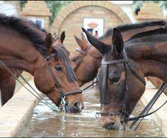 : fotografia de caballos bebiendo agua en la fuente camino al rocio . 2016