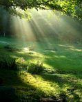 Light On The Greens