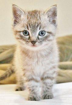 ITTY BITTY VERY CUTE KITTY <3 <3 <3 <3