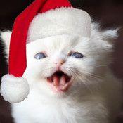 A #Christmas Talking Kitten HD #iPhone App