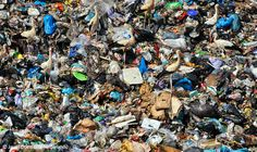 Garbage picking - Jasper Doest - Wildlife Photographer of the Year 2012 : World in Our Hands - Commended