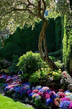 A pretty, Colorful garden..............