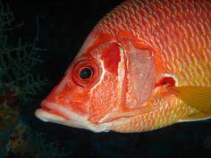 Red Fish - Maldives | Image: Zaufaran Nazeer | www.facebook.com/visitmaldives.officia