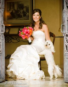 #BichonFrise picture with bride