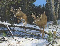 Turkey Drawing, Deer Drawing, Whitetail Deer Pictures, Deer Photos, Hunting Art, Hunting Stuff, Deer Art, Moose Art, Deer Paintings