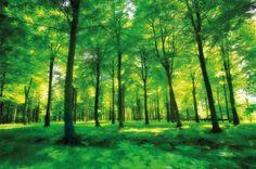 Papel pintado fotográfico de un bosque - un bosque verde como imagen mural…