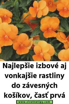 Najlepšie izbové aj vonkajšie rastliny do závesných košíkov, časť prvá It Cast, Plants, Flora, Plant, Planting