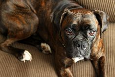 Soulful Eyes by Virginia Bailey Photography, via Flickr