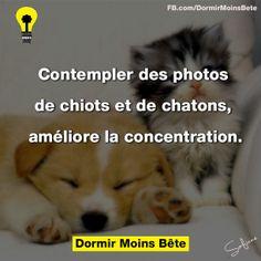 Contempler des photos de chiots et de chatons, améliore la concentration.