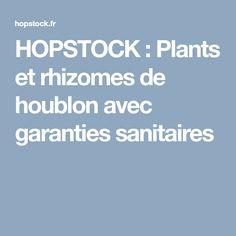 HOPSTOCK : Plants et rhizomes de houblon avec garanties sanitaires