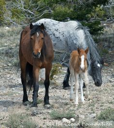 Diamond (Cloud's brother), mare Half Moon and daughter