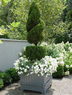 White & green themed plantings in French boxes.