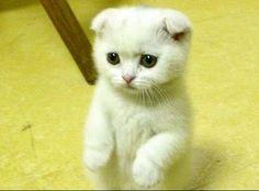 Real kitten!