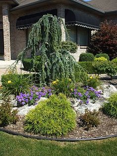 Descriptions of small evergreen shrubs perfect for