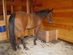 SLOW HORSE FEEDER | stall has a built in slow grazer slow hay feeder