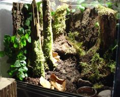 Pictures of terrariums - page 10 - terrarium- Bilder von Terrarien - Seite 10 Pictures of terrariums - page 10 - Mini Terrarium, Tree Frog Terrarium, Terrarium Reptile, Aquarium Terrarium, Reptile House, Reptile Room, Reptile Cage, Reptile Enclosure, Tarantula Enclosure