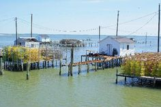 Crab shanties upon arrival in Tangier Island