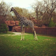 Trip to STL zoo!!
