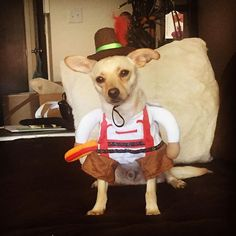 Are you guys ready yet?! I'm ready for some bratwurst. #octoberfest #october #bratwurst #dogs #chihuahuasofinstagram #chihuahua #petsofinstagram #dogofinstagram #dogsofinstaworld #dogstagram #rescue #target #targetpets @target @dailypawwoof