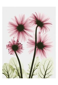Pink Gerbera Bouquet✖️More Pins Like This One At FOSTERGINGER @ Pinterest✖️