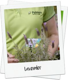 Get your garden bursting with colour video - Palmers Garden Centre http://www.palmers.co.nz/secrets-garden-success/get-your-garden-bursting-with-colour/