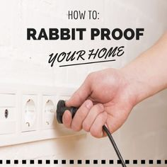 rabbit proofing your home