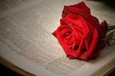 When you want to be inspired, you read the scriptures. But what happens when you want to get that twitterpated feeling that comes only from reading something ridiculously romantic? Guess what. The scriptures can help you there too.