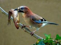 Pássaros Lindos (Mundo Animal) ~ Imagens em Vídeo