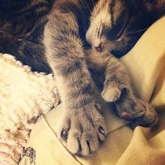 """Shhhh, let's play the quiet game."" 