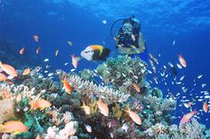 The Best Diving Sites in Boracay http://www.boracayresortbookings.com/the-best-diving-sites-in-boracay/
