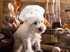 Homemade-Dog-Food-recipes-how-to-make-dog-food