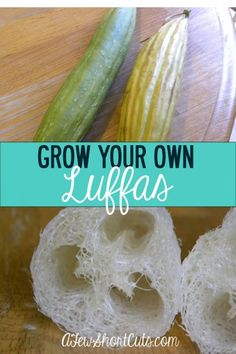 One of lifes many wonders! Did you know you can Grow Your Own Luffas? Check out how it works and where to find the seeds! Growing Ginger Indoors, Spring Plants, Herbs Indoors, Backyard Garden Design, Herb Garden, Garden Pond, Garden Club, Fruit Garden, Balcony Garden