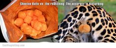 Cheetos Balls vs the real thing   Cool People Shop