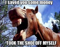 Um... thanks? | 10 horses that aren't laughing WITH you, they're laughing AT you