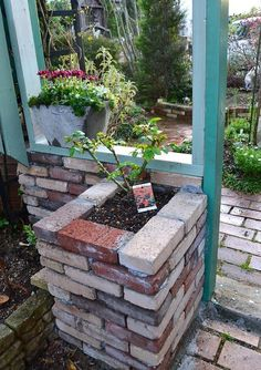 Roses planted in raised brick beds/containers