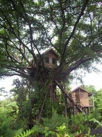 Might look fragile, but the tree house is very appreciated at http://www.guestus.com/EN/Australia-and-Oceania/Vanuatu/Tafea/Tanna/Hotels/Tana-Tree-Top-Lodge/