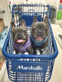 Dog Friendly Stores That Allow Your Pooches, As Modeled by French Bulldog Friends