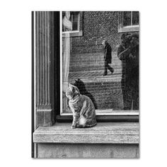 Trademark Fine Art 'The Cat, The Lady And' Canvas Art by Luis Bonito, Gray