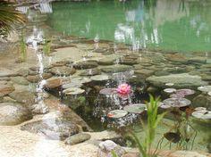Bio Pool Pond Natural Swimming Ponds, Natural Pond, Pond Landscaping, Landscaping With Rocks, Swimming Pool Designs, Swimming Pools, Backyard Water Feature, Dream Pools, Cool Pools